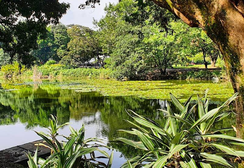 Lago del Jardín Botánico