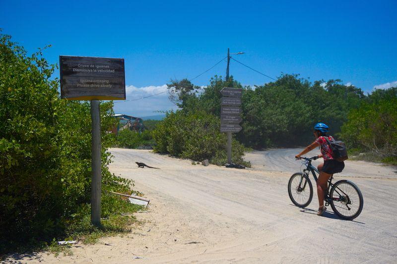 """El """"iguana crossing"""", cruce de iguanas. Literal. ¡Ojo que a veces es hora punta!"""