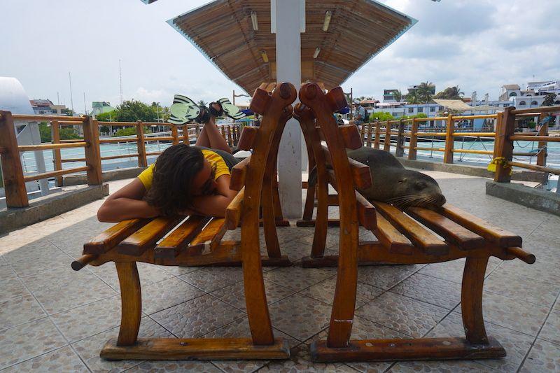 Lobo marino e Inês compartiendo siesta en banco en Puerto Ayora, Santa Cruz