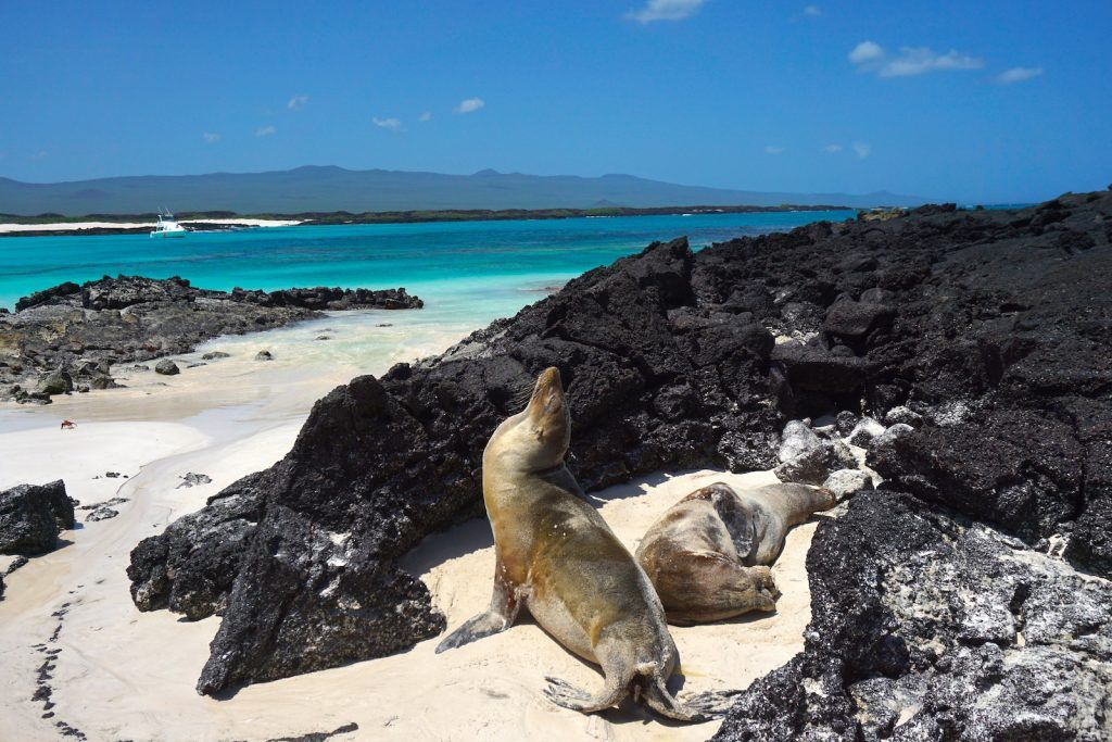 How to visit the Galapagos Islands on your own, without a cruise: best tours, beaches and places to see