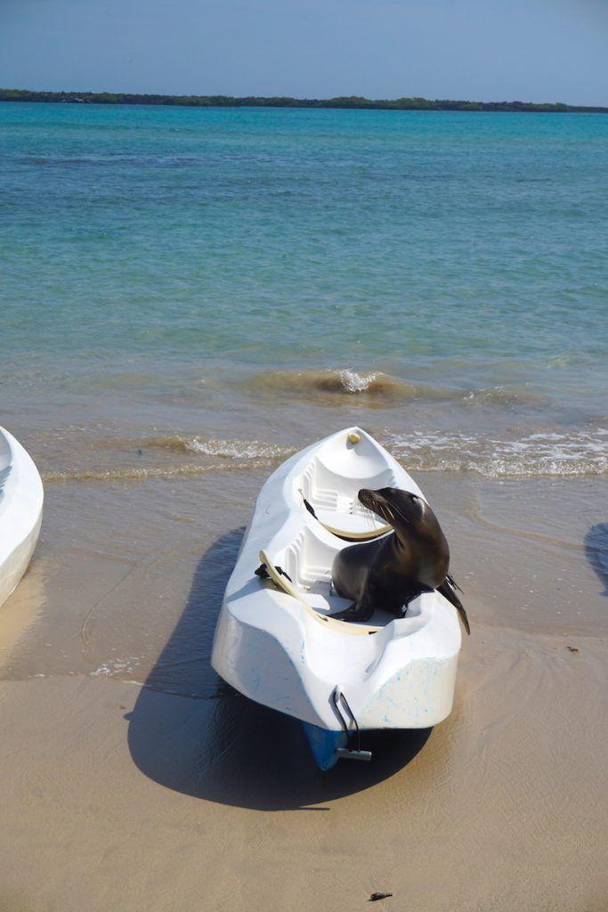 """""""¿Puedo ir en el kayak contigo? ¿Puedo ir en el kayak contigo? ¿Puedo ir en el kayak contigo? ¡Porfa Porfa Porfa!"""""""