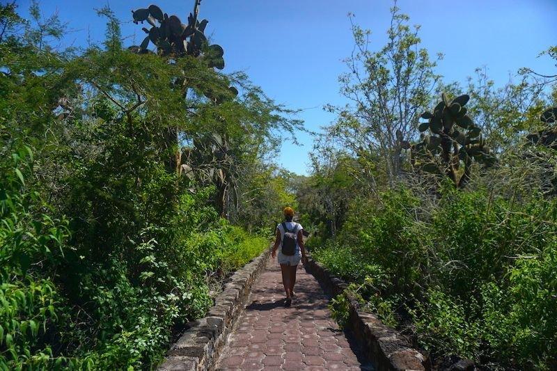 Caminando a Tortuga Bay, Santa Cruz
