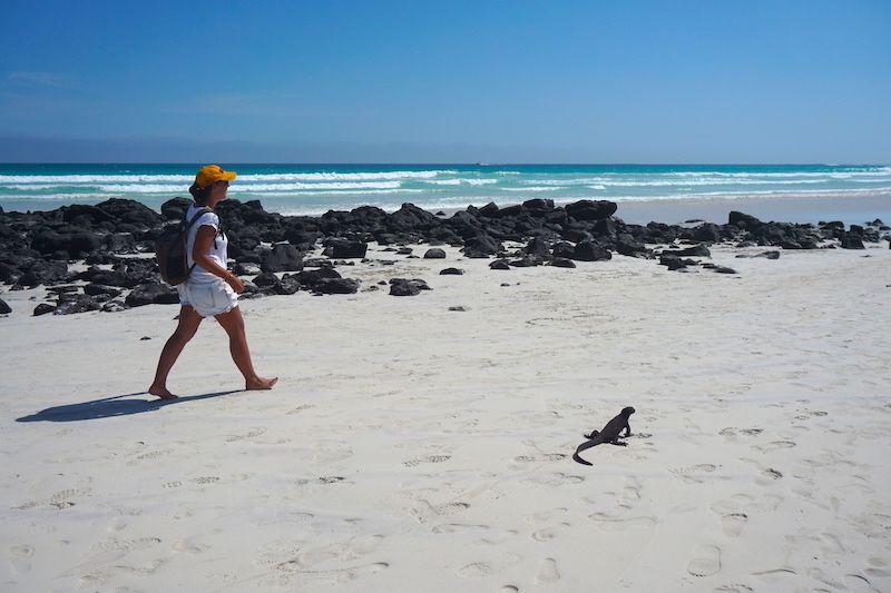 Caminando al lado de una iguana en Tortuga Bay, Santa Cruz