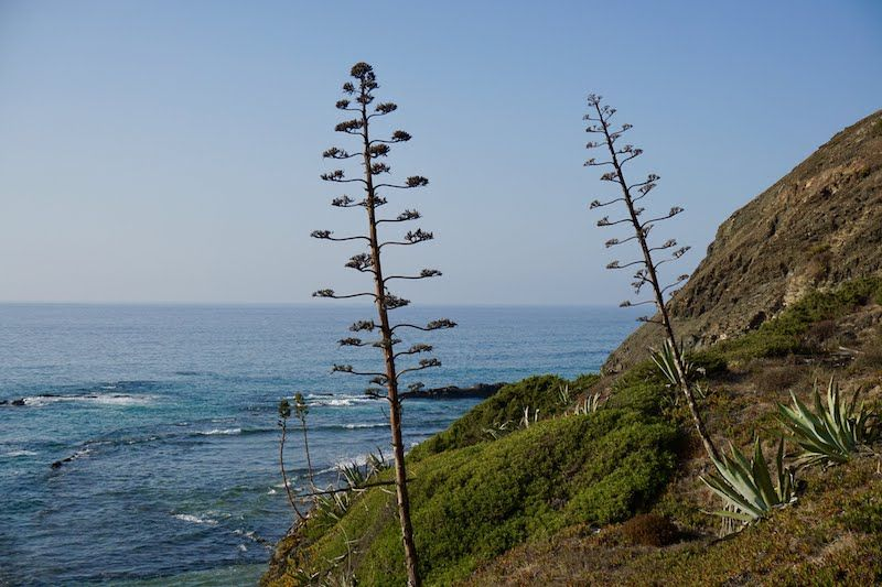 El Parque Natural del Sudoeste Alentejano y Costa Vicentina es de los más bellos de Portugal. Cuídalo.
